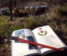 Barbattini-Ghirardi-Giovinazzo, Le api delle città